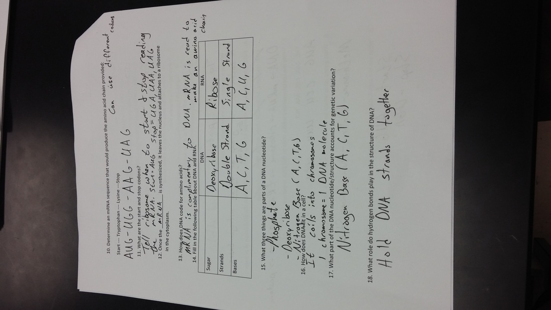 Biology 10 4 cell differentiation worksheet answers